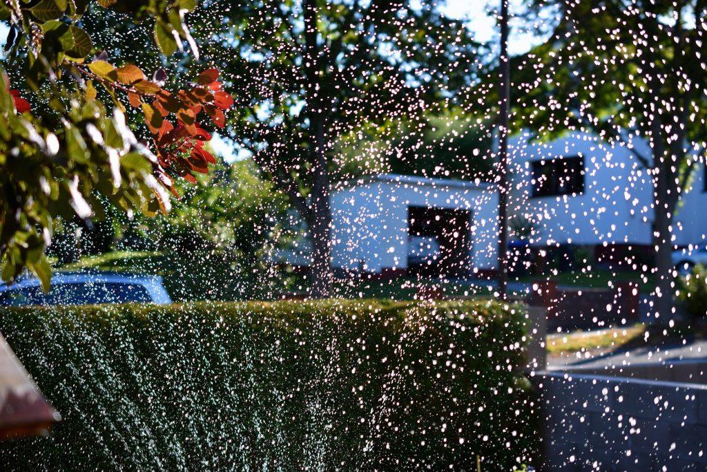 sposoby oszczedzania wody w ogrodzie